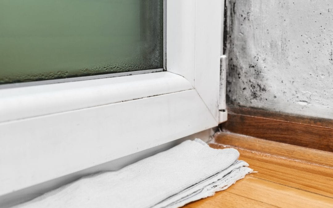4 Signs of Mold in the Home